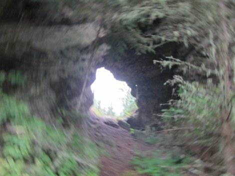 The Amygdaloid Arch