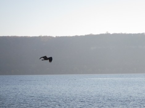 Eagle over the Mississippi
