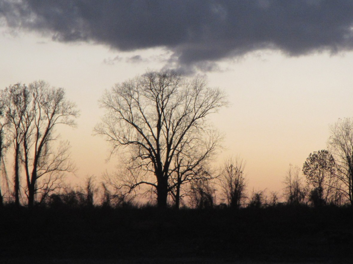 Tree at Sunset on the Mississippi