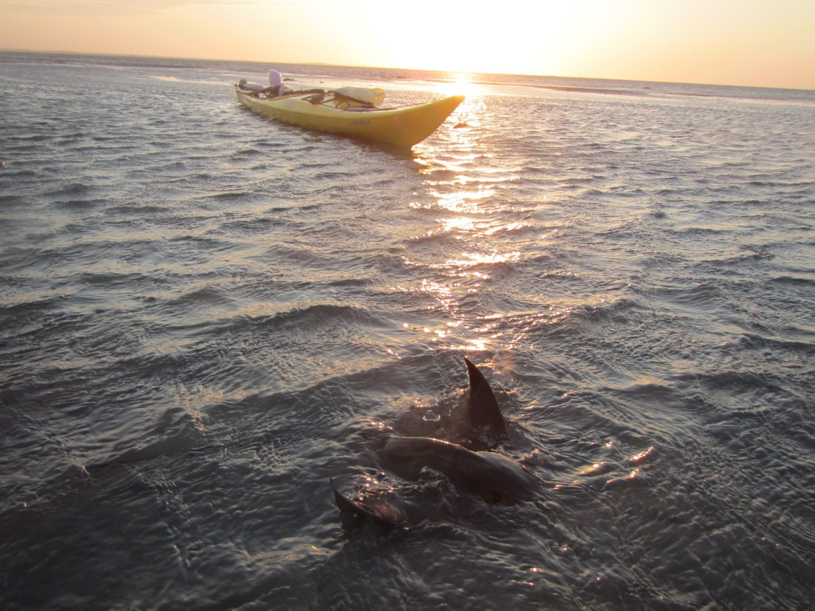 Stingray at Low Tide